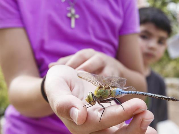 Audubon Adventure Program for Homeschool Pods