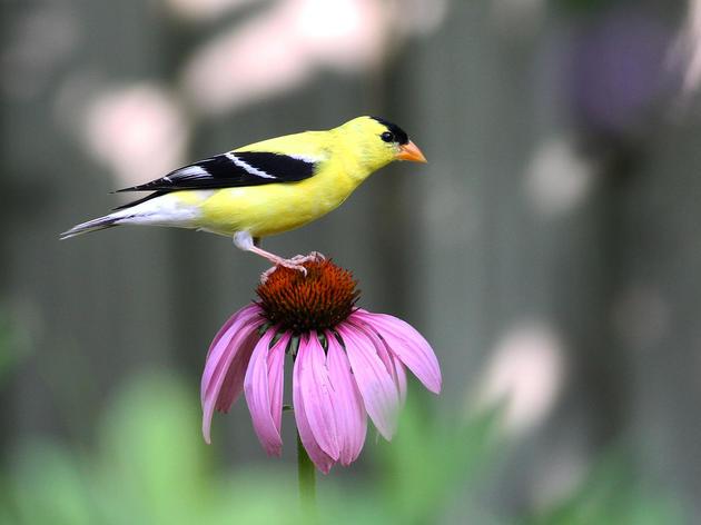 North-Central Texas Master Birder Program