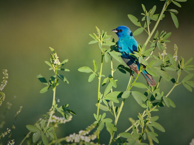 Bird Friendly Programming