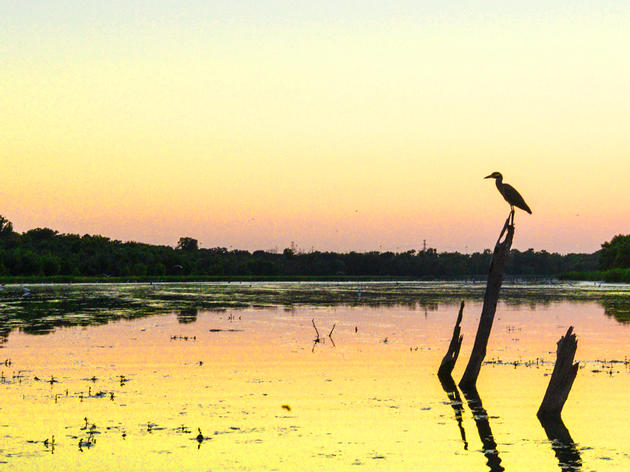 Early Morning Birding