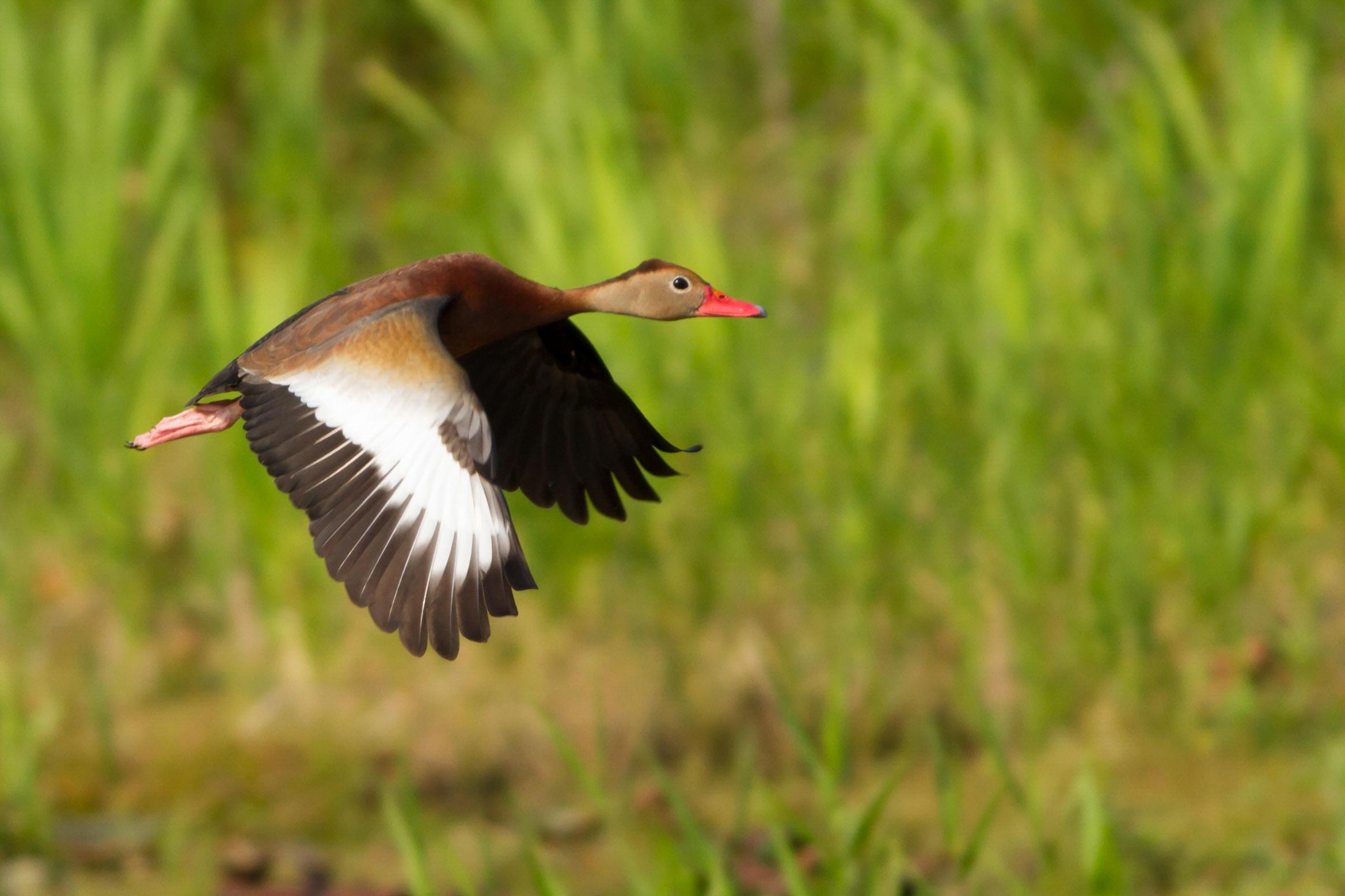 North-Central Texas Master Birder Program | Trinity River